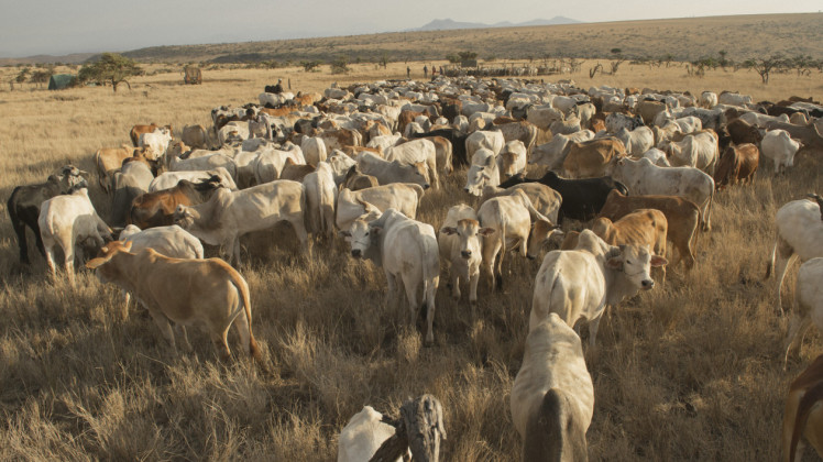 The goal of the NRT program is to encourage resilient communities with healthy rangelands that can support both their cattle and their wildlife. Photo © Ami Vitale