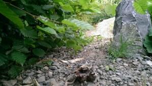 Gehege aus Schildkrötensicht