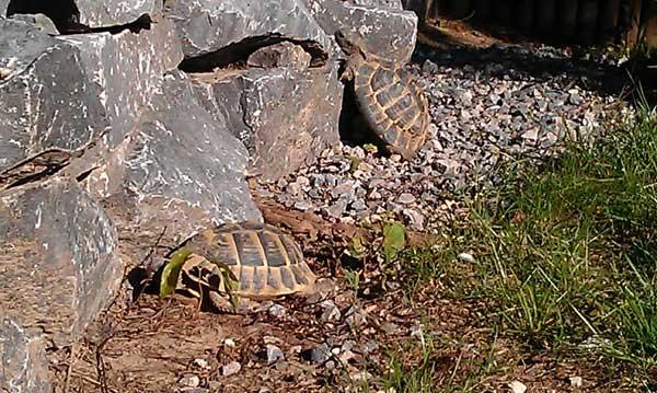 Schildkröten genießen die Sonne