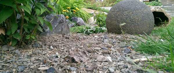 Gehege aus Landschildkrötensicht