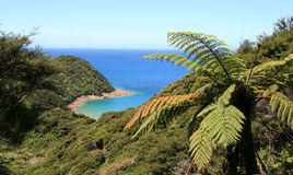 abel-tasman-bay-looking-down-national-park-new-zealand-36426616