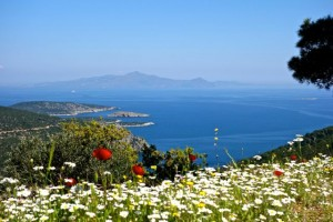 Spring flowers from the Temple of Poseidon