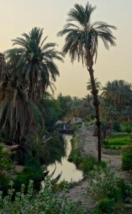Lovely West Bank of the Nile near Gharb Soheil Nubian village