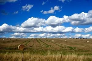 Bavarian wheat fields