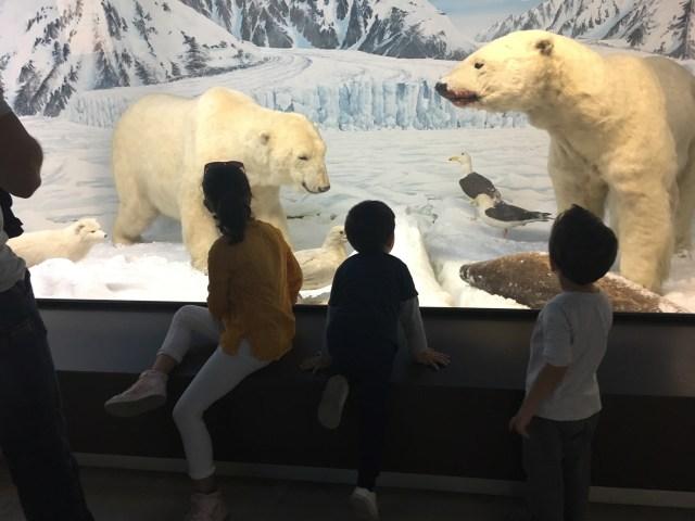 Museo storia naturale Milano