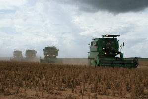 Campos ilegales de soya transgénica y pesticidas; se están acabando a las abejas