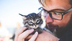 Oferta de empleo: en Irlanda necesitan cubrir el puesto para 'abrazador' de gatos
