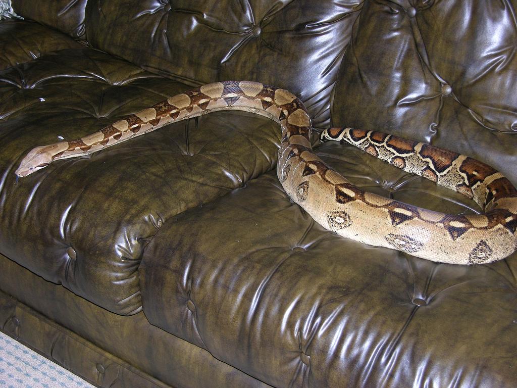 Serpiente ataca a mujer en Estados Unidos