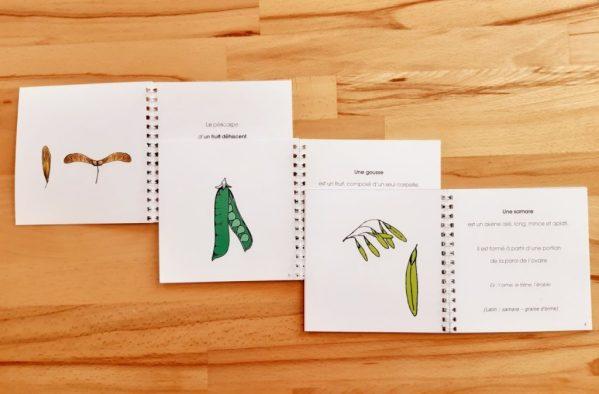 Nomenclatures de botanique Montessori 6-12 ans