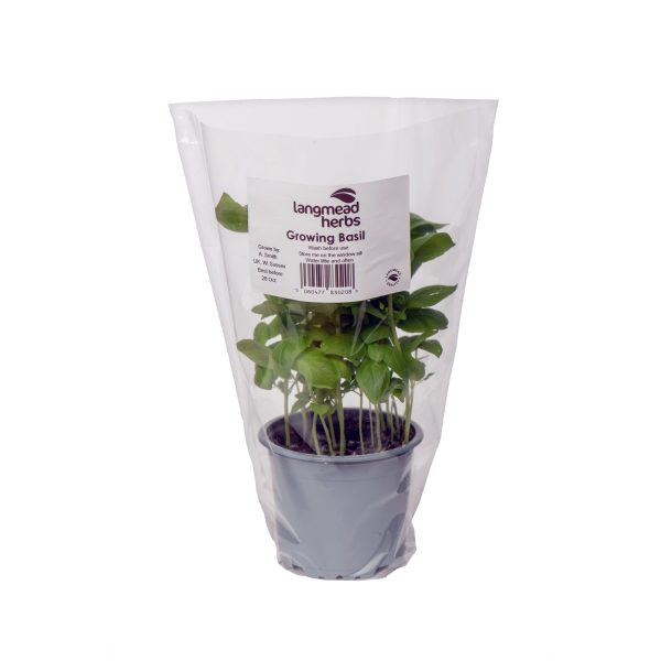 Potted Basil (with Sleeve)