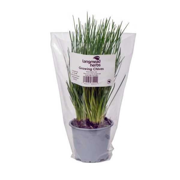 Potted Chives (with Sleeve)