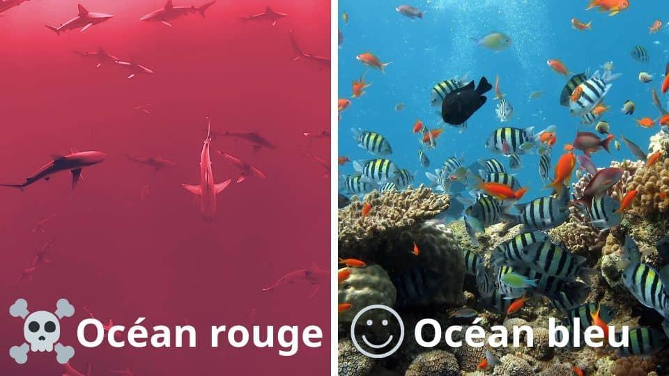 L'anglais, c'est votre facteur compétitif différenciant, l'accès à votre océan bleu