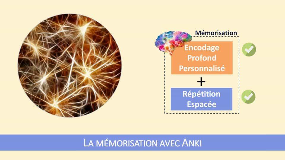 Anki est le seul outil existant à ce jour qui permette d'agir simultanément sur les deux leviers d'une mémorisation efficace : un encodage profond et personnalisé de l'information et la puissance de la répétition espacée