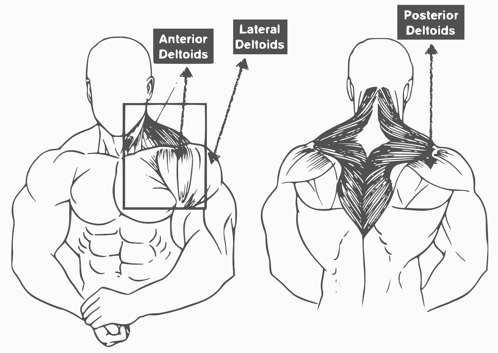 Shoulder Workouts: 10 Best Shoulder Exercise For Muscle