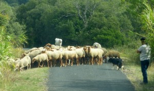 Sometimes the traffic is heavy on the local roads