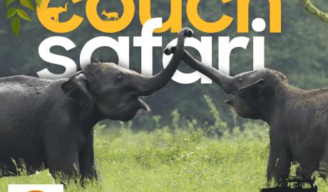 Go on a couch safari