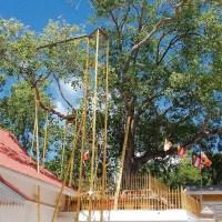 Jaya Sri Maha Bodhiya