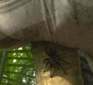 manuel casella ragno isola 9
