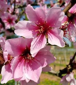 foto oroscopo primavera