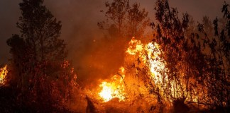Indonesia: incendios arrasan más de 4.4 millones de hectáreas