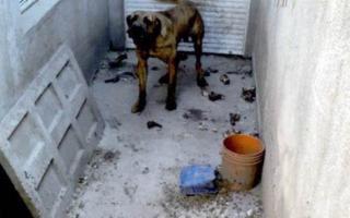 Un hombre fue condenado a un mes de prisión en suspenso por maltratar a su perro. Foto: BTF.