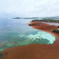 Comment valoriser les algues brunes?