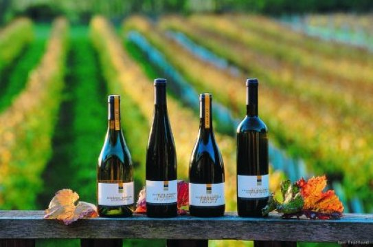 NZ-wine-tourism