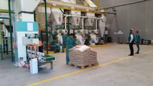 Pellets de madera Wood Pellets EN Plus DIN Plus