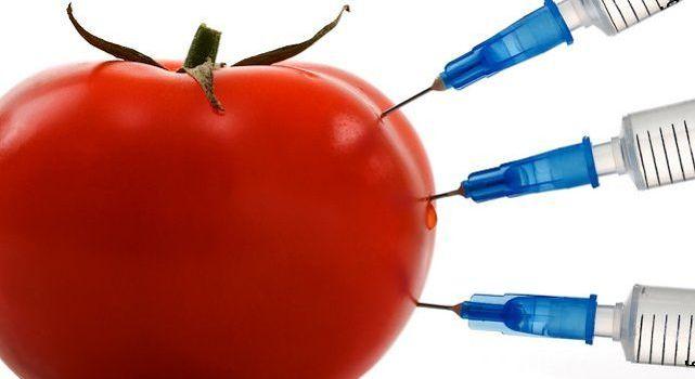 Nel silenzio assoluto, a vostra insaputa, Bruxelles apre le nostre porte agli OGM