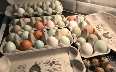 ägg säljes