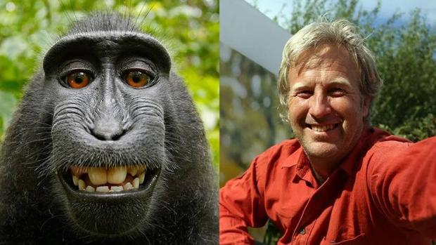 El mono y el fotógrafo británico