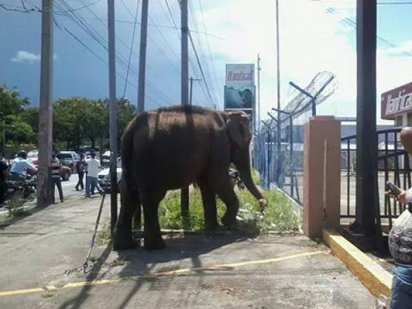 600x400_1409430889_elefante