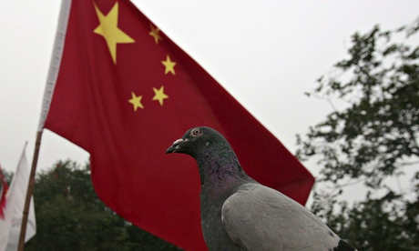 A pigeon in front of the Chinese national flag