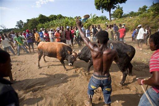 Haiti-toros fotogaleria