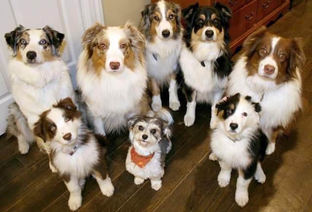 Grupo de perros / veoverde.com