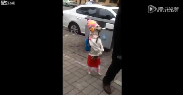 perra en china