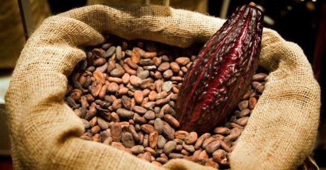 Cacao-Venezolano-Thumb2