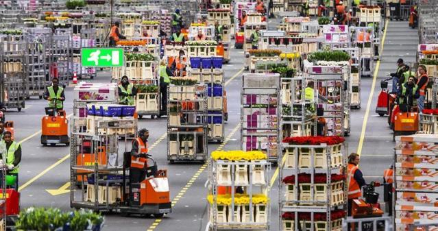"""Trabajadores transportan los cajones de flores subastados en """"FloraHolland"""" en Aalsmeer (Holanda) hoy, martes 19 de mayo de 2015. """"FloraHolland"""" ha vuelto a dar beneficios tras las grandes pérdidas que sifrió el año pasado, por primera vez desde 2008. EFE/Remko De Waal"""