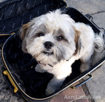 Perro-y-maleta-1-e1423660301621