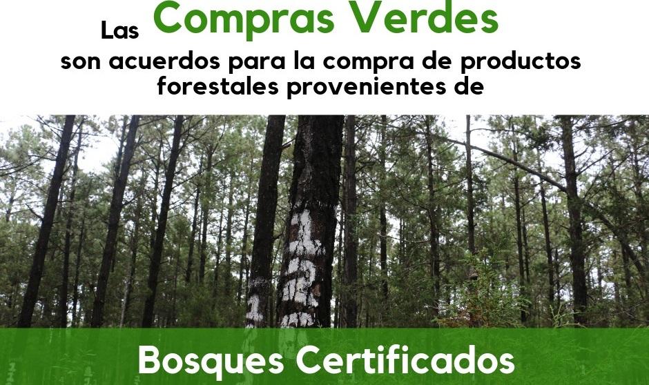 Guachochi, el primer municipio chihuahuense en comprometerse con el consumo de madera sustentable