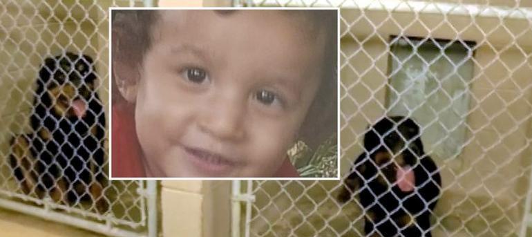 Perros rottweiler matan a niño de 2 años frente a sus abuelos