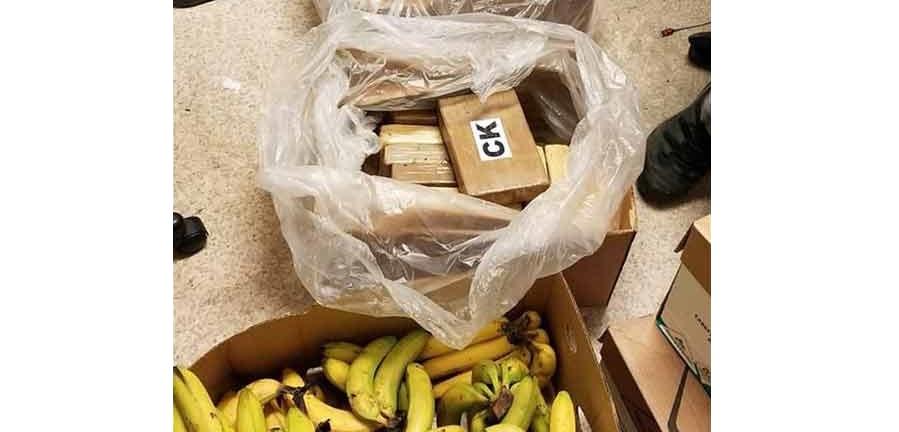 Descubren cocaína en cargamentos de plátanos en Washington