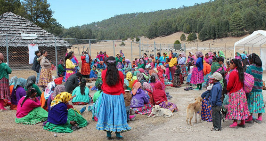 Reclaman indígenas despojo de tierras por activista en Carichí.