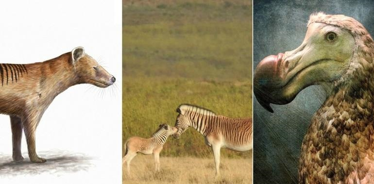 Estos son 10 animales que se extinguieron por culpa de los humanos