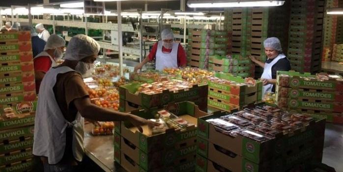 Caen exportaciones mexicanas con 2.9 por ciento anual, refleja retrocesos