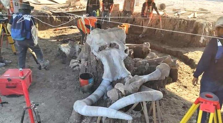Encuentran restos de 60 mamuts en Aeropuerto de Edomex