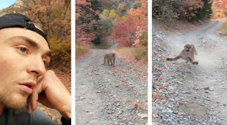 """""""No quiero morir"""": sufrió senderista aterradora persecución de puma"""