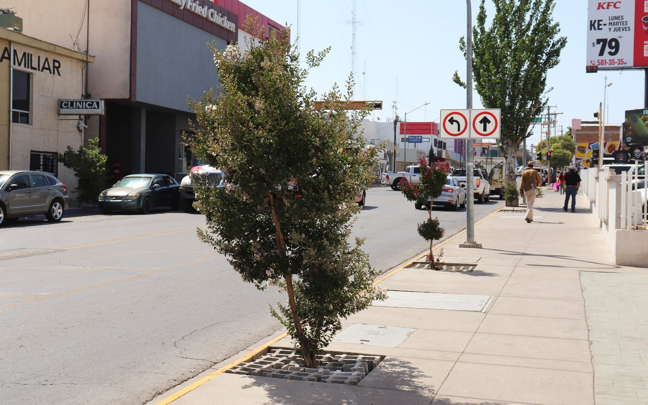 "Aportará Estacionómetros 100 árboles a proyecto ""Plantemos vida en el centro de Cuauhtémoc"""