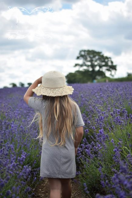 Eco Travels | Somerset Lavender Fields
