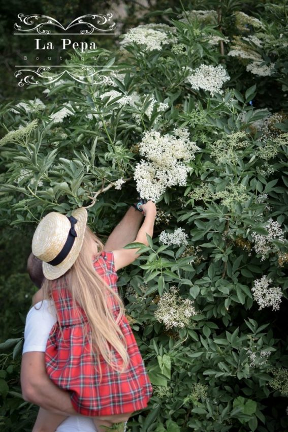 Eco Kitchen |  Foraging Elderflowers and Drying for Tea 15